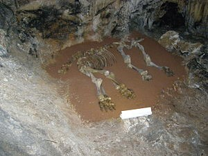 Mammoth Skeleton Kyik-Koba Cave, Crimea
